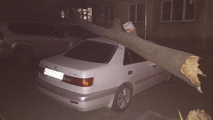 Порывистый ветер повалил деревья на машины и дороги Новосибирска