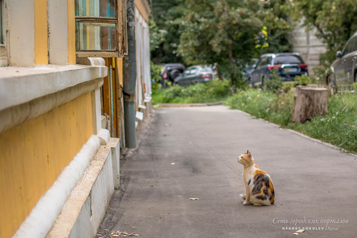 Животное в дом отдают в надежде, что собака или кошка проживут там всю оставшуюся жизнь в любви и безопасности