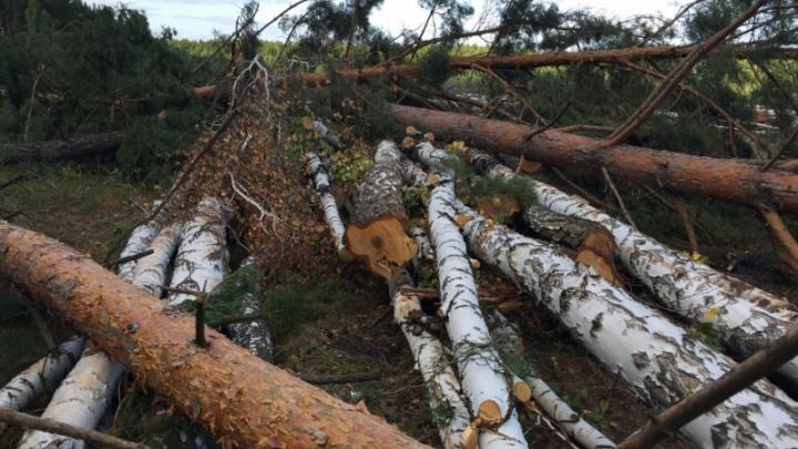 В Зауралье обнаружено место незаконной рубки деревьев. Ущерб оценивается в 2,5 миллиона рублей