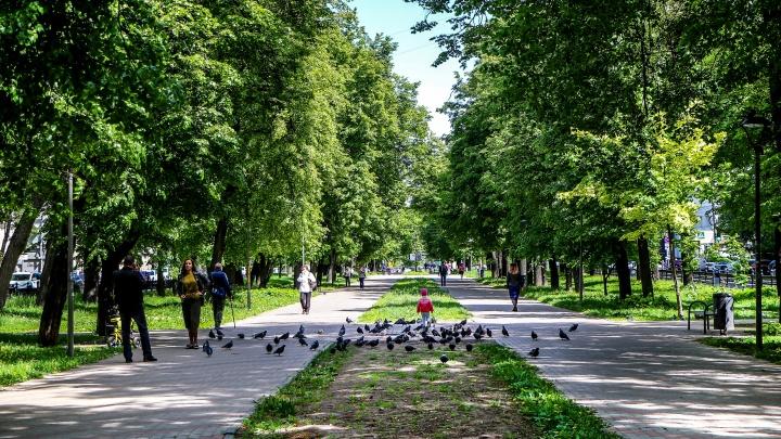 Главный по паркам назначен в Нижнем Новгороде. У городских зон отдыха появится руководство