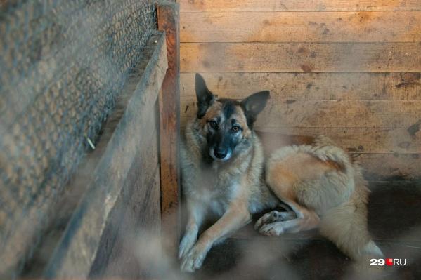 Заинтересованные граждане, желающие взять собаку или кошку в пункте отлова, не могли этого сделать, так как Северодвинская станция по борьбе с болезнями животных отправляла их в муниципалитет, где от животных отказывались