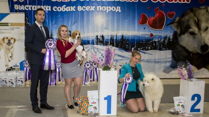 В Новосибирске прошла выставка для влюблённых в собак — её посетило полтысячи человек