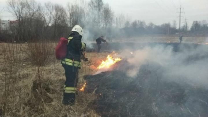 Огонь перекинулся на деревья: в Ярославле поймали поджигателя травы
