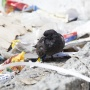 «Я их называю экотеррористами»: регоператор рассказал о нарушителях мусорной реформы
