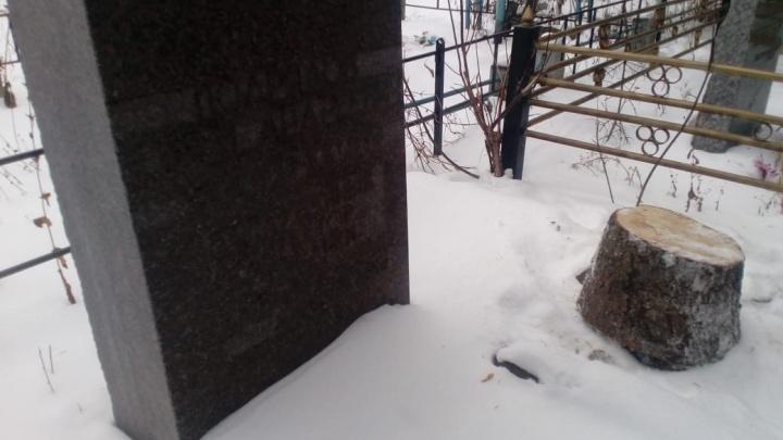 В Башкирии новогоднюю елку для поселка спилили на кладбище