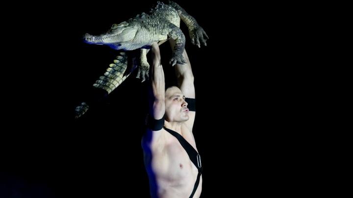 «Всё только по собственному желанию»: в Волгограде клоунов купают в бассейне с крокодилами