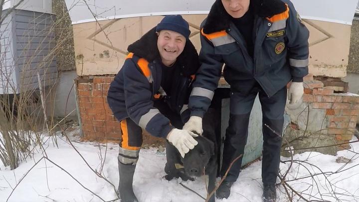В Ярославле спасатели вытащили провалившегося в подвал пса