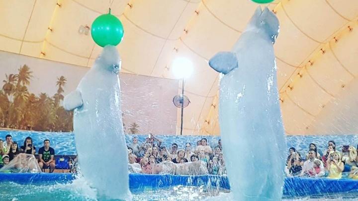 Первые зрители поделились впечатлениями об открытом дельфинарии у «КомсоМОЛЛа»