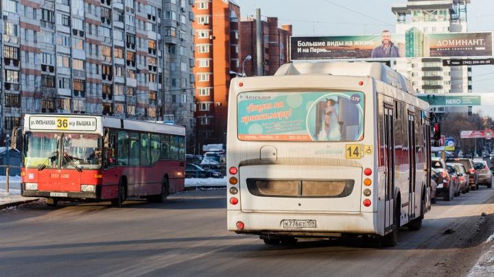 Время бесплатных пересадок на общественном транспорте Перми могут увеличить с 40 минут до часа