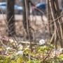 Дачникам разрешили оформить в собственность участки в Ново-Буянском лесничестве