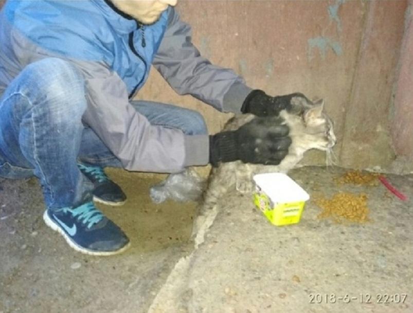 Семья из Уфы спасла застрявшего в щели между домами кота