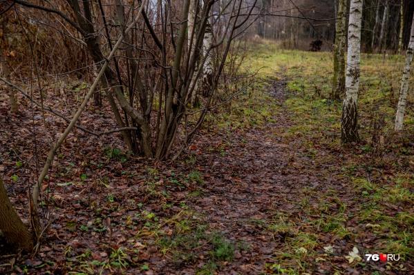 Труп мужчины нашли в Ярославле в лесополосе на пересеченииулицы Пирогова и Костромского шоссе