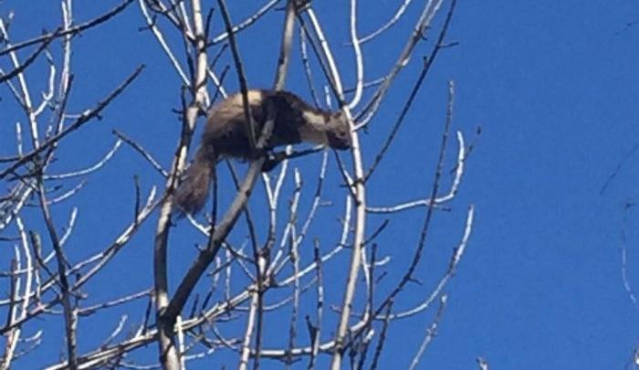 В центре Уфы по деревьям скакал лесной хищник