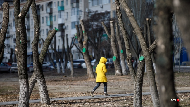 Туманно и безветренно: в Волгоградской области потеплеет до+10 ºC