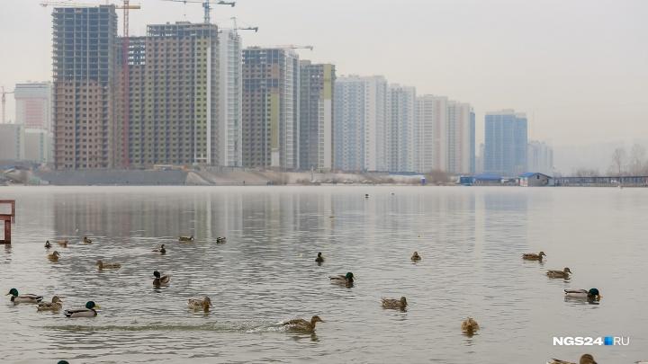 Красноярцы скупают неликвидное жилье по высоким ценам. Эксперты готовятся к уходу новых застройщиков