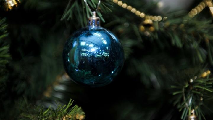Праздничный сюрприз для курганцев: новогоднюю ель установят и в Заозерном