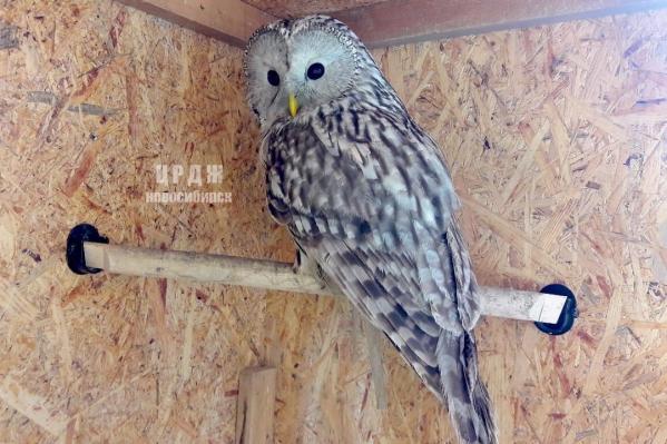 У неясыти была черепно-мозговая травма и небольшая травма глаза, но птица быстро от них оправилась