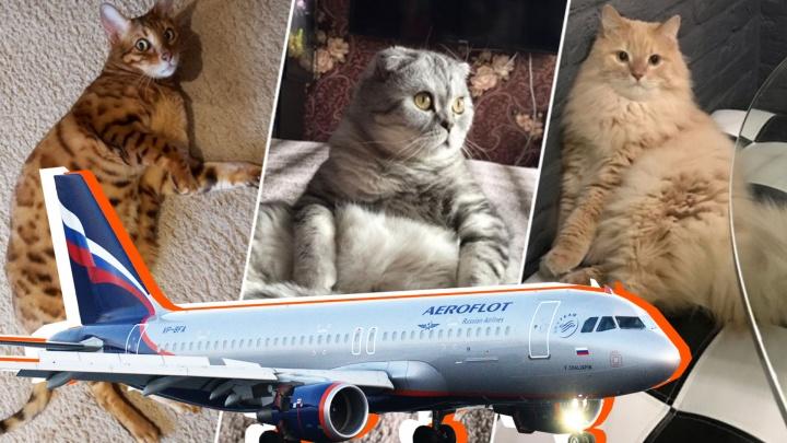 Усатый не пройдет: уральские котики, которые остались бы за бортом «Аэрофлота»