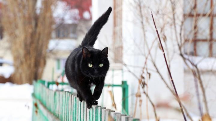 Всем мяу: смотрите, как уфимские кошки приветствуют долгожданную весну