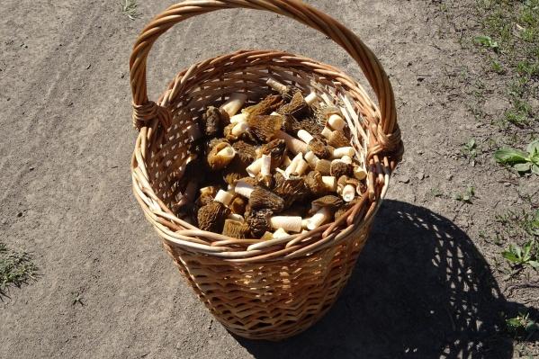 Из-за сухой погоды грибов в новосибирских лесах пока ещё немного