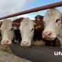 В Башкирии построят молочную ферму за три миллиарда рублей