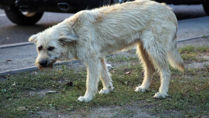 «Усыпить или оставить?»: Под Волгоградом собака прокусила лоб трёхлетней девочки