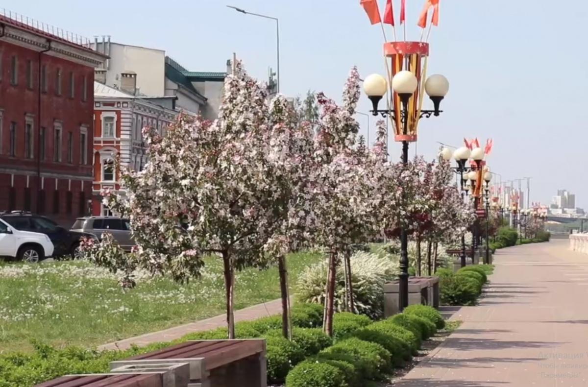 Многие нижегородцы ходят мимо этих красивых деревьев и не знают, откуда в нашем городе взялась эта душистая красота