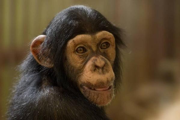 Новой обитательнице зоопарка в мае исполнилось три года