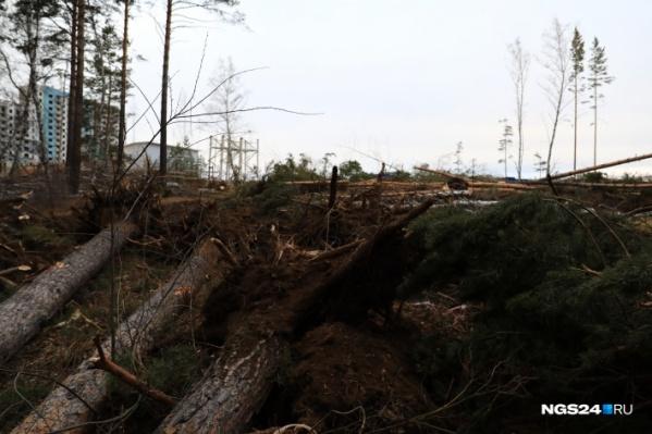 Вырубка деревьев все чаще вызывает возмущение жителей