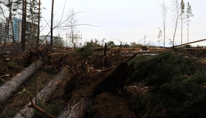 Депутаты предложили устраивать публичные слушания при вырубке больше 5 деревьев