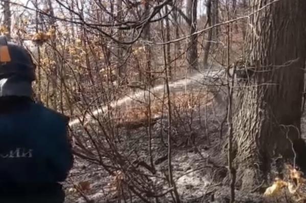 В лесу много единичных очагов, которые приходится тушить вручную