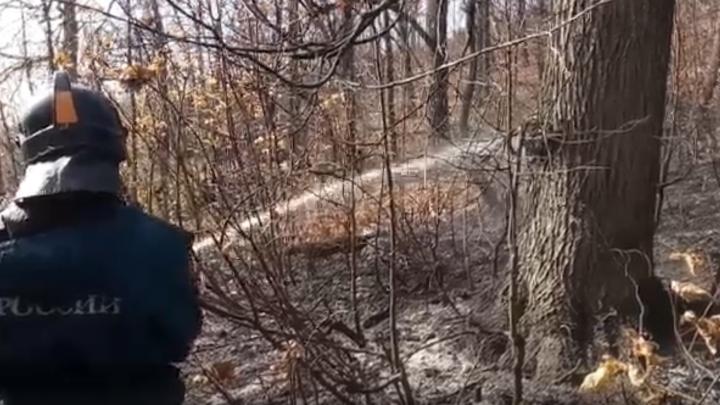 В Самарской области вторые сутки горит лес