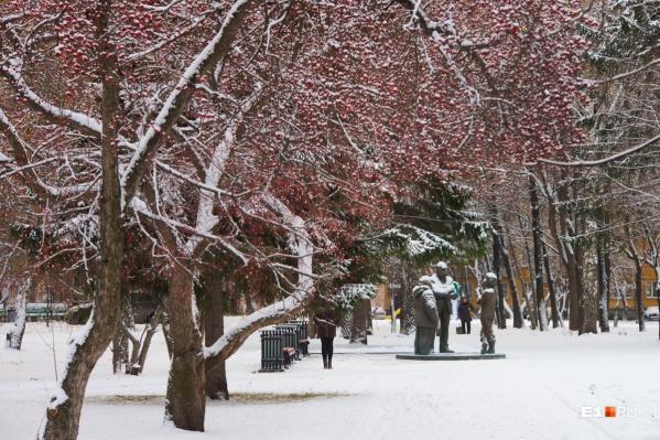 Первыми перепишут деревья в центре города