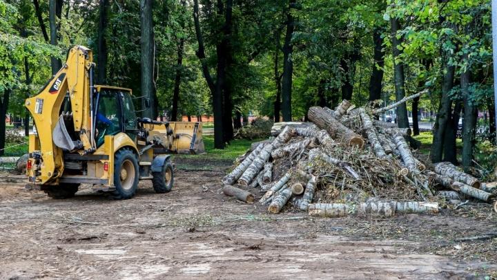 В центре Нижнего Новгорода планируется вырубить деревья за полмиллиона рублей