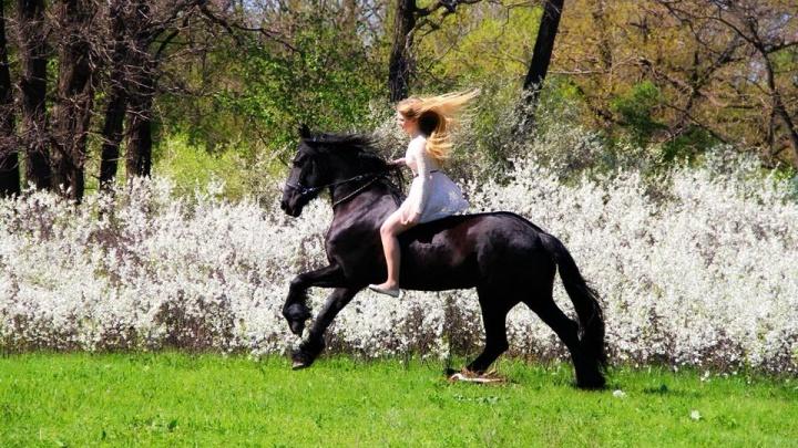 «Она истощена, копыта воспалены»: уральцы спасли породистую лошадь, которую чуть не загубили хозяева