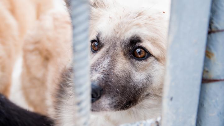 В Тольятти агрессивная собака не пустила врачей к умирающему хозяину