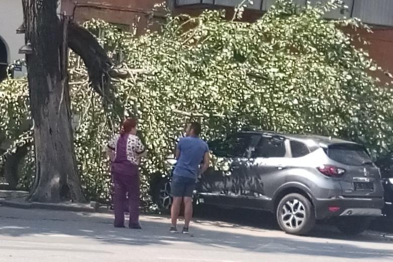 Хозяину автомобиля стоило слушать советы МЧС не парковаться под деревьями при сильном ветре