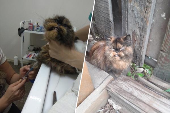 Кошка сейчас и кошка до того, как ее нашли