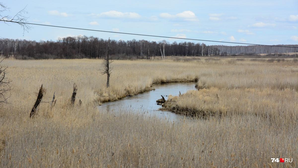 За мостом — поросшее травой болото, которое, судя по всему, накопило запас изотопов: повышенный фон чувствуется даже на высоте нескольких метров