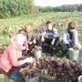 Выживаем как можем: директор сельской школы в Зауралье о труде детей и продаже овощей