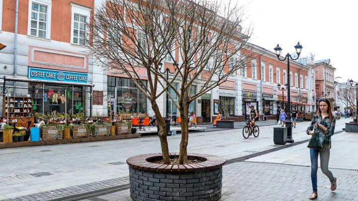 На Большой Покровской умерли высаженные при реконструкции улицы деревья. Уже в пятый раз