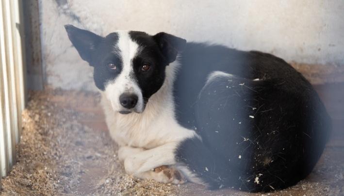 В Челябинске начали отлавливать бездомных животных: рассказываем, куда жаловаться на стаи собак