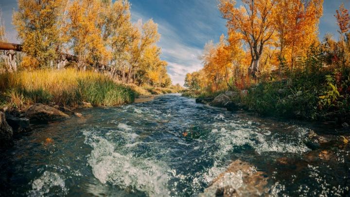 Золотая Мокрая Мечетка: волгоградец с фотоаппаратом встретил утро на берегу реки