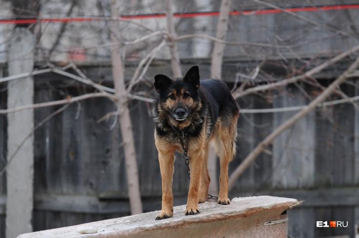 Горожанина осудили за убийство собаки на Эльмаше