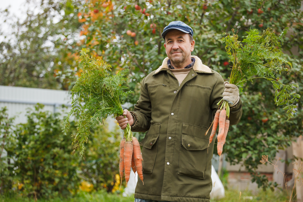 Помог ли муляж системы слежения в борьбе с дачным воришкой и кто на самом деле съел все кабачки, капусту и морковь?