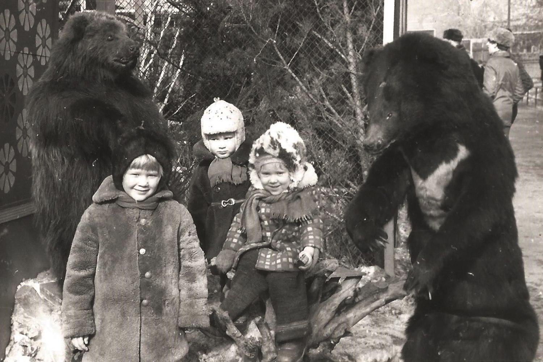 В старом зоопарке стояли чучела медведей