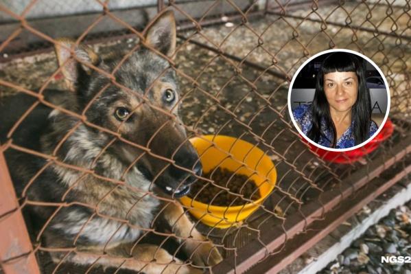 Общественница поделилась мнением о том, как избавить Красноярск от бездомных животных