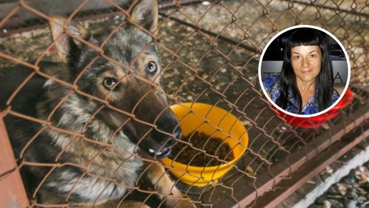 Стерилизовать и ввести налог: зоозащитница о том, что делать с бездомными собаками на улицах
