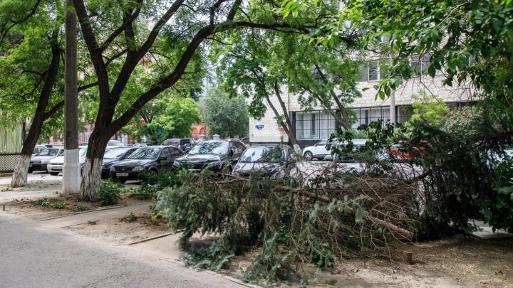 Полмиллиона рублей потратят на высадку саженцев взамен вырубленных деревьев на юге Волгограда