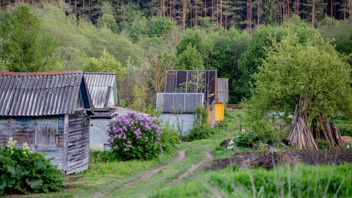 «Держал в садовом домике»: в Ярославле кавказец похитил девушку около торгового центра
